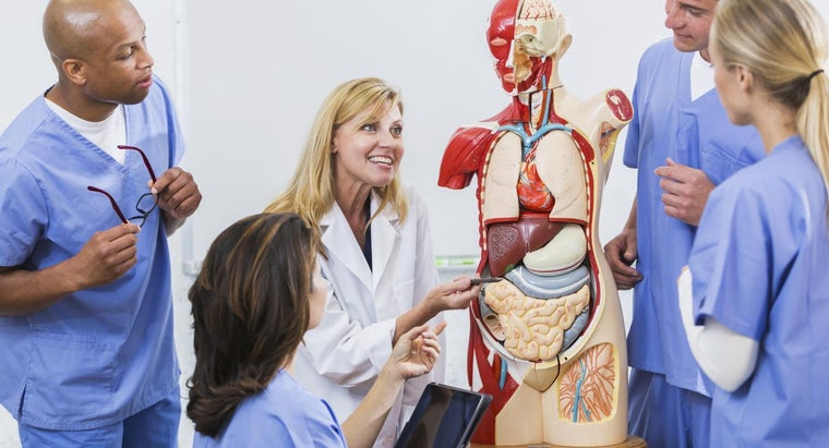 What Are the Medical Names for Organs of the Female Anatomy?