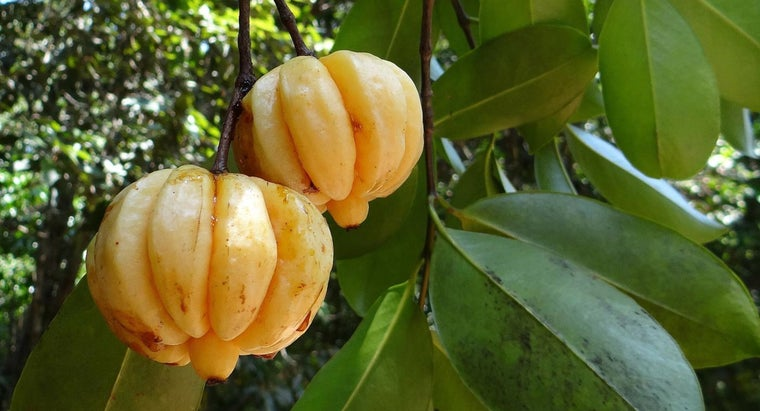Does Pure Garcinia Have Any Side Effects?