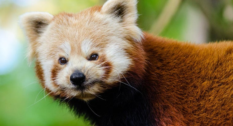 Where Are Some Good Resources for Learning General Animal Facts?