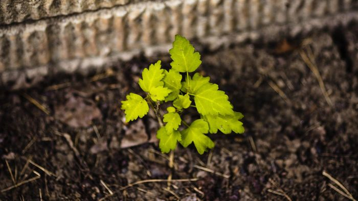 What Are Some Good Tips for Growing Trees From Seed?