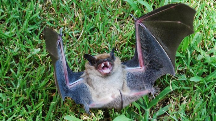 How Do You Get Bats Out of the House?