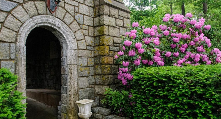 What Are Some Flowering Shrubs?