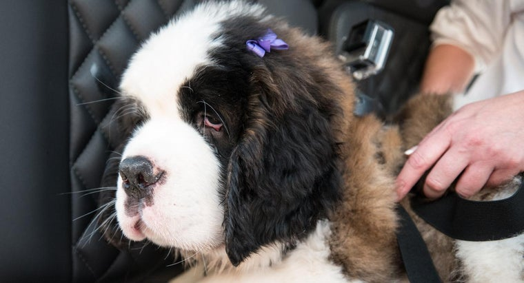 Where Could You Look to Find Free Saint Bernard Puppies?