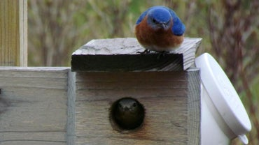 Where Can You Find a Plan to Build a Bluebird House?