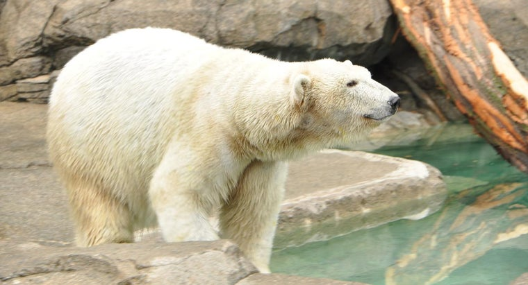 What Are Some Good Charities That Campaign for Saving the Polar Bears?