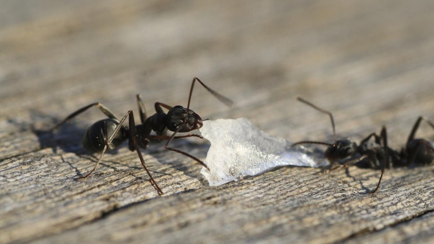 How Do You Get Black Ants Out of Your House? | Reference.com