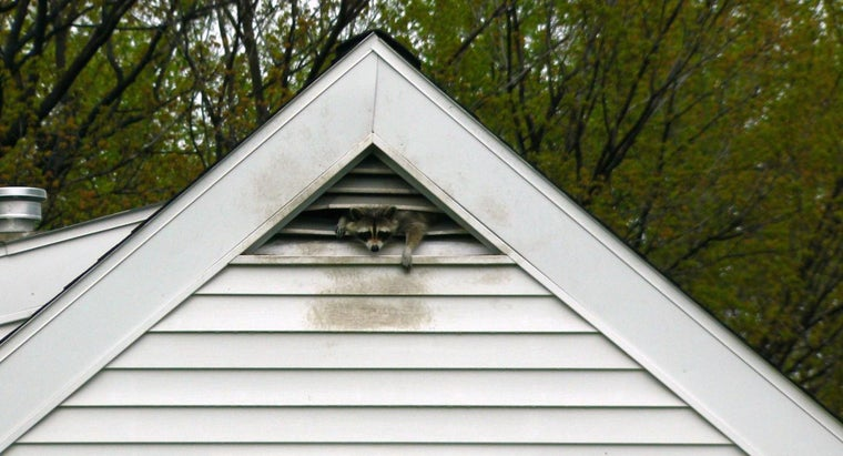 How Can You Get Rid of Raccoons in the Attic?