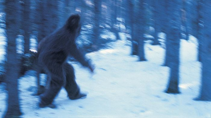 What Type of Information Is Available About Recent Bigfoot Sightings?