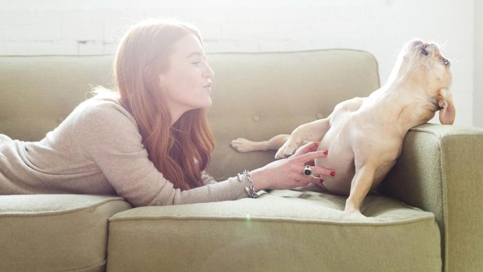 What is pet sitting?