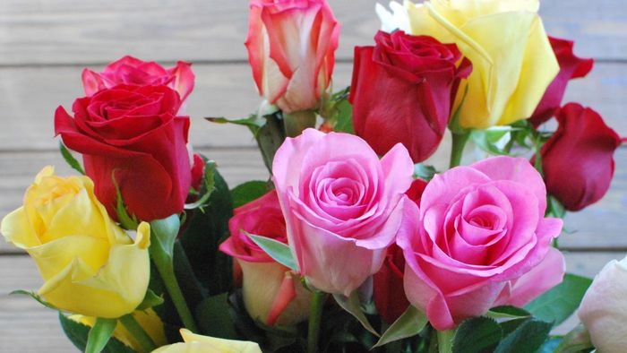 What Is the Meaning of Different Rose Colors?