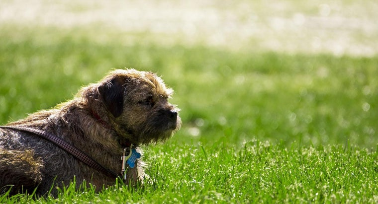 Is It Safe to Give Tylenol to a Dog for Pain?