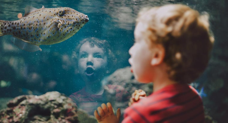 What Are Some Fish Facts for Kids?
