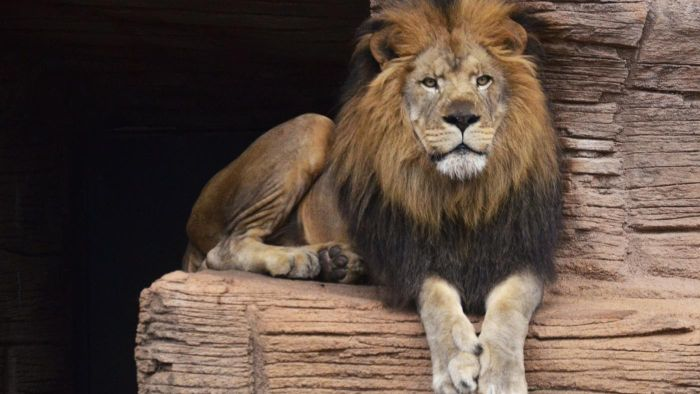 What Are Some Tips for Visiting the Riverbanks Zoo?