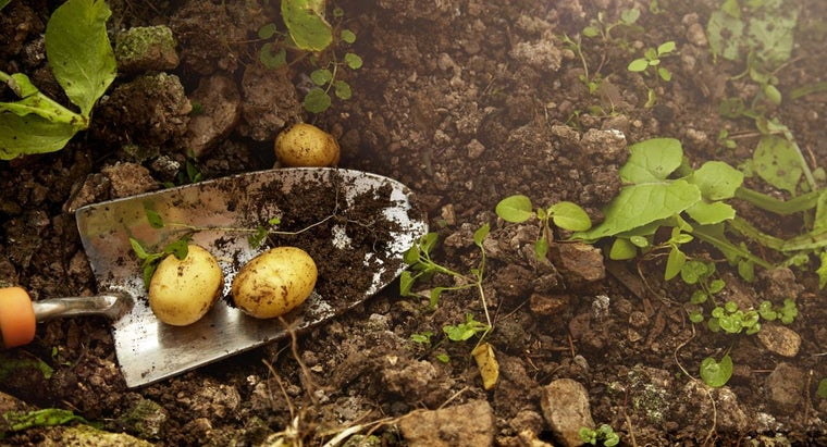 How Do You Plant Potatoes in Containers?