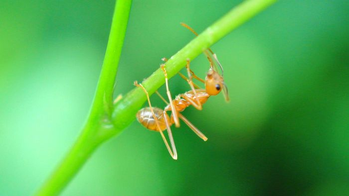 What Are Home Remedies for Fire Ant Bites?