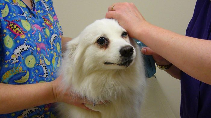 What Are the Symptoms of Cushing's Disease in Dogs?