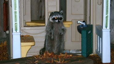 What Can I Use for a Raccoon Repellent?