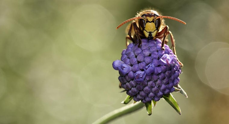 What Are Fast Treatments for a Hornet Sting