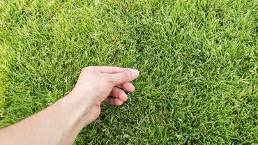 What Are Some Good Liquid Lawn Fertilizers?