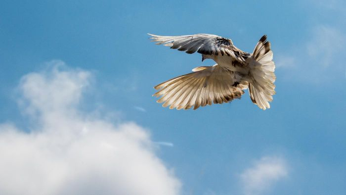 How Do You Deal With a Pigeon Infestation?
