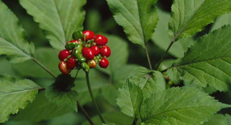 What Factors Determine the Price of Wild Ginseng?
