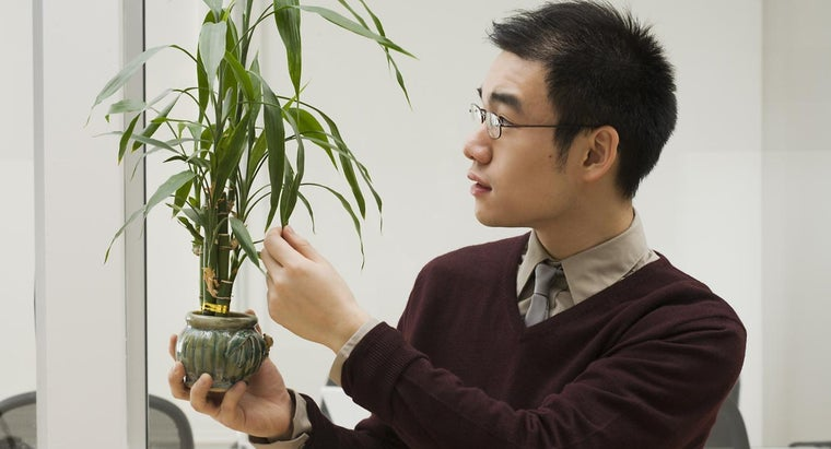 What Are Some Tips for Growing Lucky Bamboo Indoors?