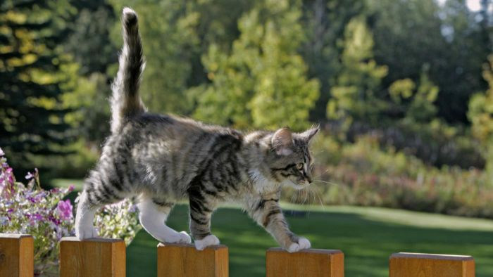 What are common ways to repel cats from entering your yard?