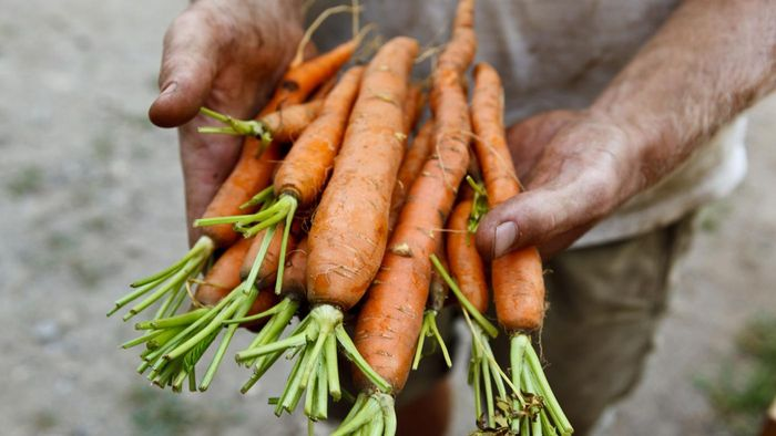 Can you freeze raw carrots?