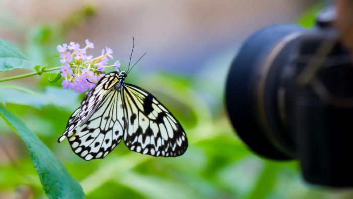 How Do You Take Pictures of Butterflies?