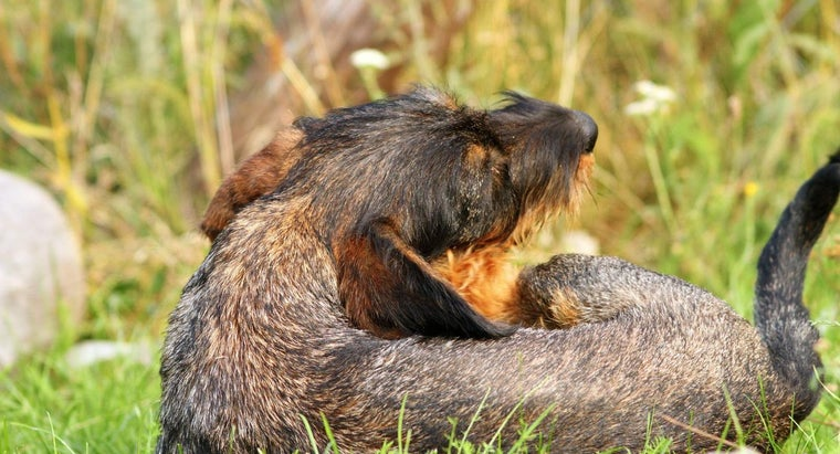 How Do You Know What Skin Disease Your Dog Has?
