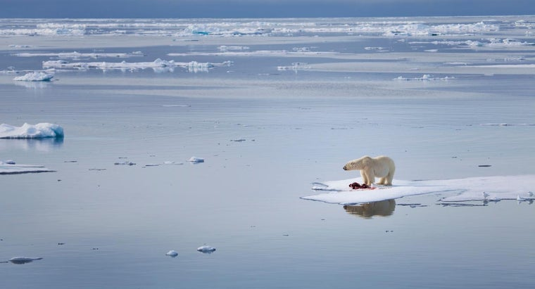 Is It a Fact That Polar Bears Do Better in the Wild?