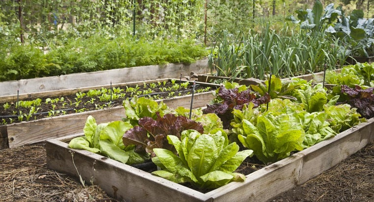 What Vegetables Would Be on an Easy-to-Grow List?