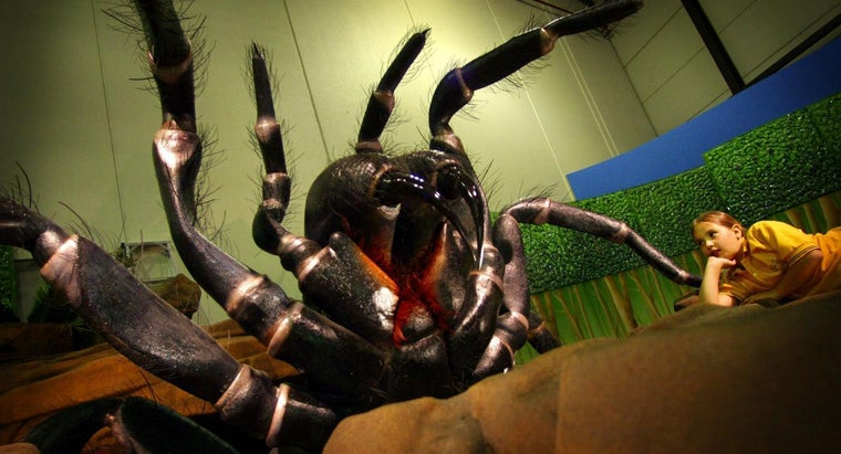 What Is the Deadliest Spider?