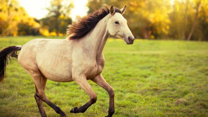 What Are Some Anatomical Adaptations of a Horse?