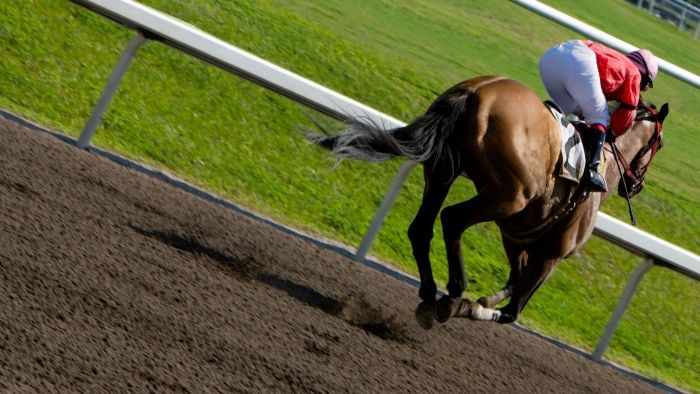Where Can You Find the Results for the Breeders' Cup?