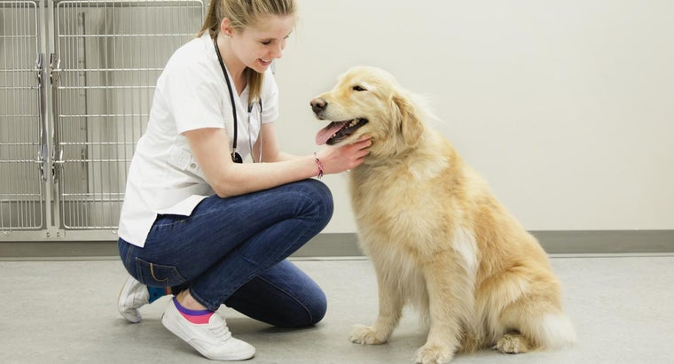 What Are the Benefits of 24PetWatch Pet Insurance?