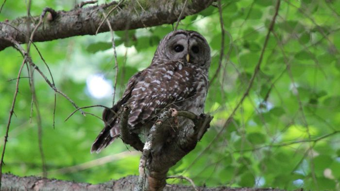 What Are Some Interesting Facts About Owls for Kids?