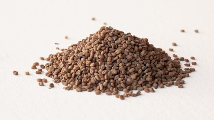 What Are the Side Effects of Fenugreek?
