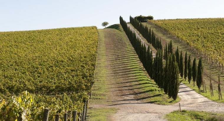 Where Can You Find Reviews of Perillo's Italian Tours?