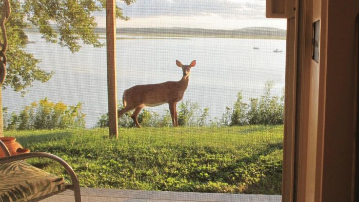 What Are Some Deer-Resistant Plants?