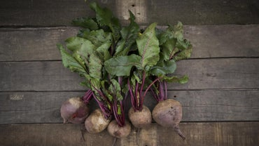 Are Beetroot Leaves Poisonous?
