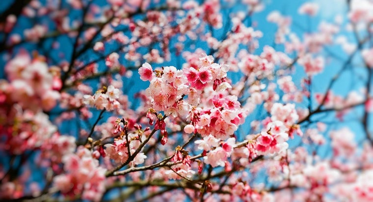 What Are Some Inspirational Quotes About Spring?