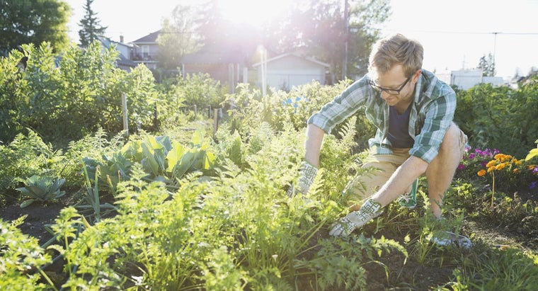 What Are Some Uses for a Vegetable Garden Layout Planner?