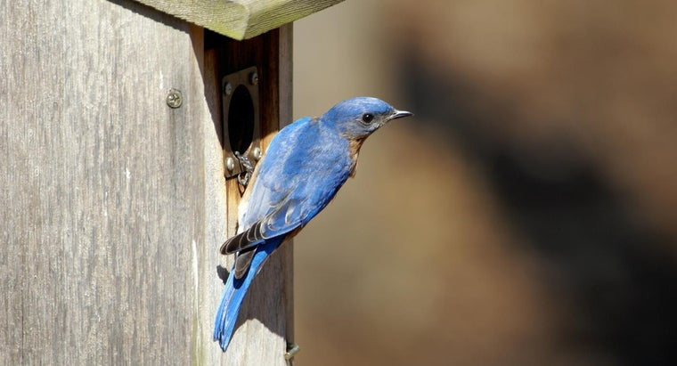 Where Should You Place a Bluebird Box?