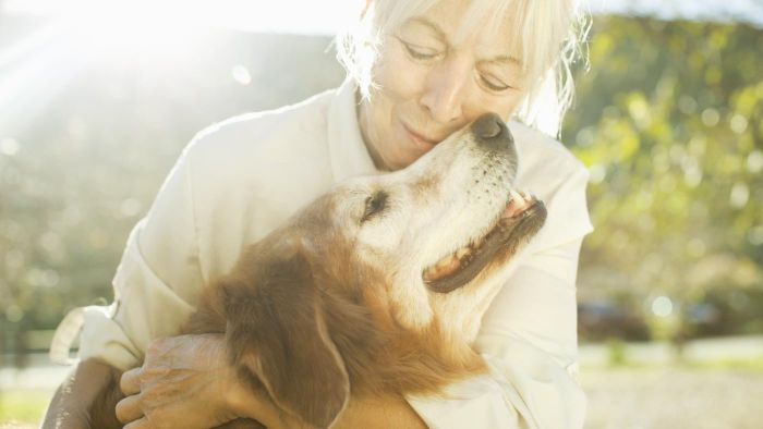 What Are Some of the Symptoms of Canine Diabetes?