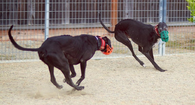 Where Can You Find Greyhound Racing Results?