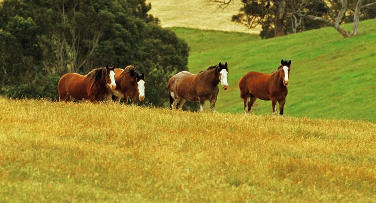What Are Some Names of the Budweiser Horses?