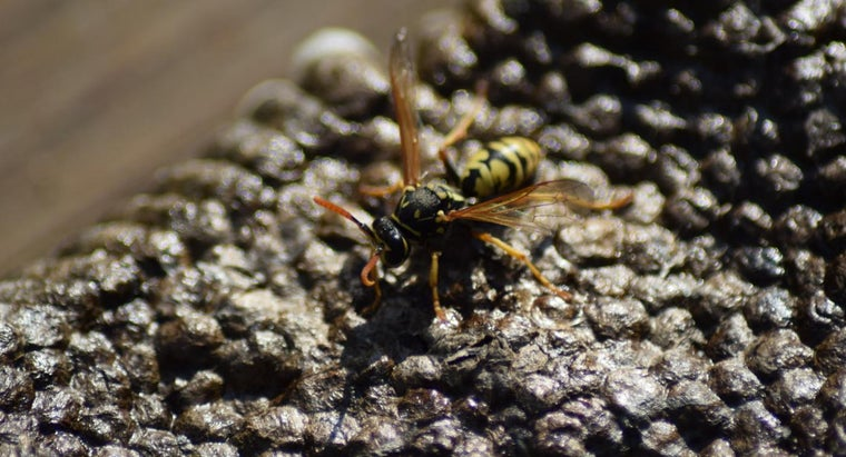 How Do You Safely Remove a Yellow Jacket Nest?