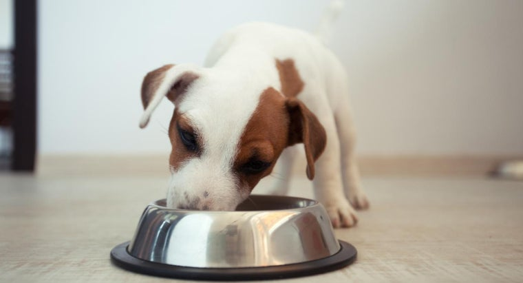 How Much Should You Feed a Puppy?