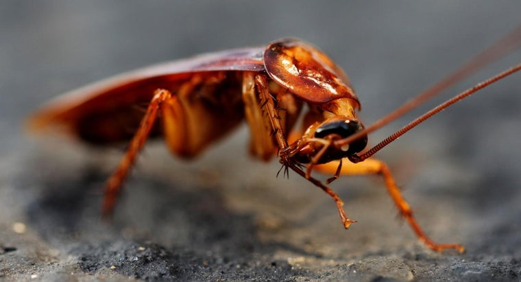 Is There a Natural Way to Kill Roaches?